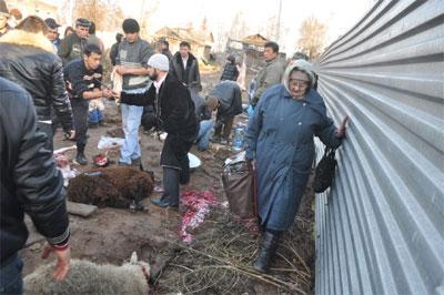 курбан-байрам фото баранов