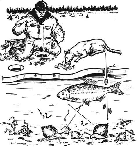 Паразит на теле рыбы 74