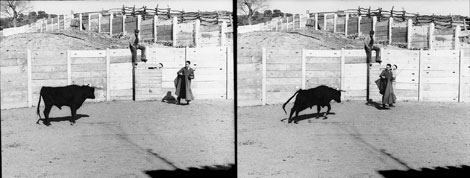 Боевой бык, в мозг которого имплантирован стимосивер, атакует Дельгадо на арене для корриды в Испании в 1963 г. (две средние фотографии) и затем резко останавливается и поворачивает в сторону под воздействием радиосигнала, посланного ученым (крайнее справа фото).