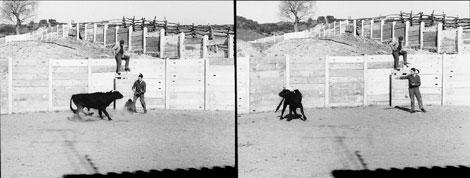 Критики настаивали, что стимуляция не подавила агрессию быка, как утверждал сам Дельгадо, а просто заставила его свернуть влево. Ученый, выросший в Ронде, где бои быков прочно укоренены в традиции, признается, что успел испугаться, прежде чем прибор заставил животное прекратить атаку.