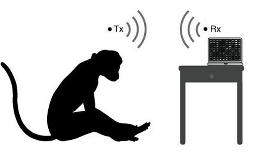 http://3rm.info/uploads/posts/2013-03/1364203529_brain-implant-neural-engineering-bolton-yin-april-2013-2-jpg.jpg