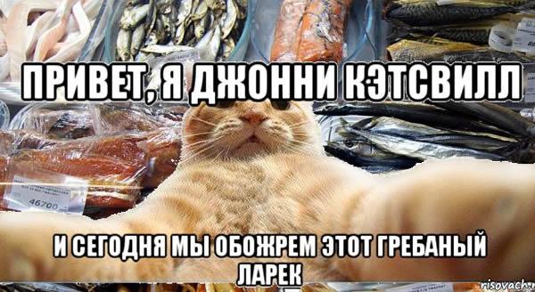 Кот в ларек