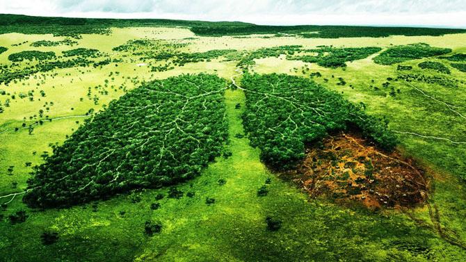 Что мы уничтожили на планете за последние 50 лет