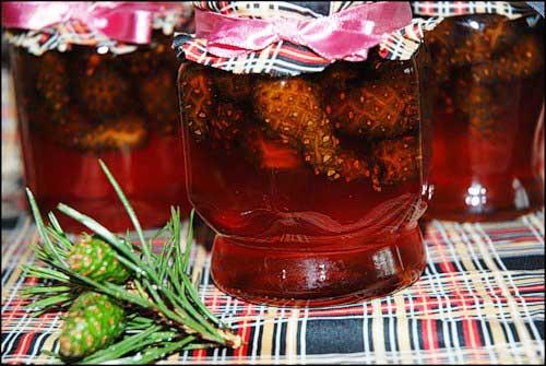Мед из сосновых шишек рецепты с фото