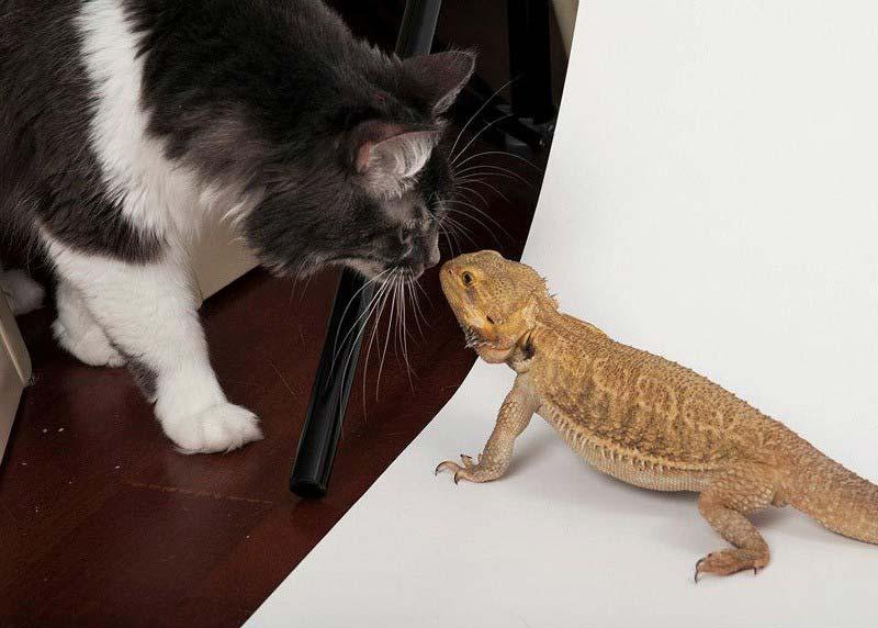картинка как животные помогают друг другу яркие буквально дышащие