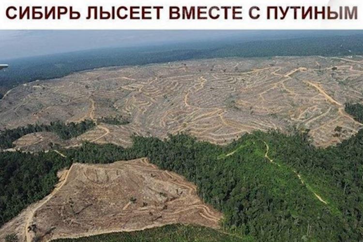 Оккупационная власть последовательно проводит геноцид русского народа